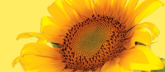 EVA Sunflower Oil